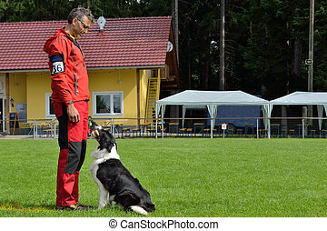Border Collie beim Apportieren - Border Collie in retrieving...
