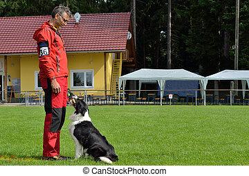 Border Collie beim Apportieren - Border Collie in retrieving...