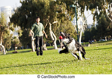 Border Collie Catching Dog Ball Toy at Park