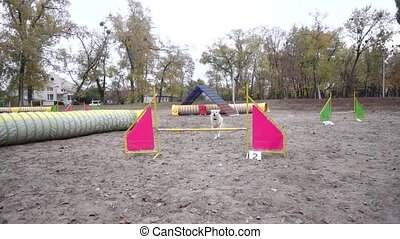 Border collie dog jumping at barrier on agility training at the autumn park, slow motion