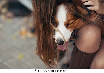 border collie dog lying on the lap of a girl