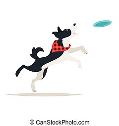 border collie dog running Frisbee