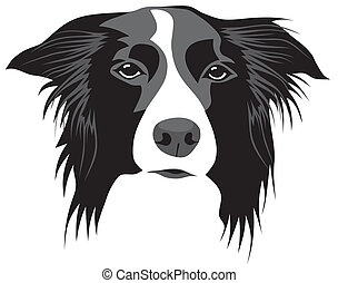 Border collie - Abstract vector illustration of border...