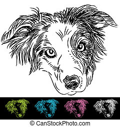 Border Collie Face - An image of border collie face set.