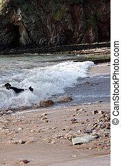 Border collie in the sea
