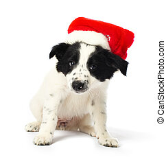 Border collie puppy with santa hat