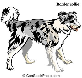 Border collie vector illustration