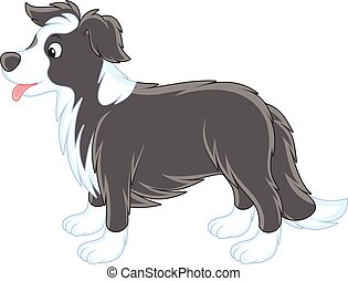 Border collie - Vector illustrations of a black and white...