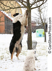 Border collie with a tree