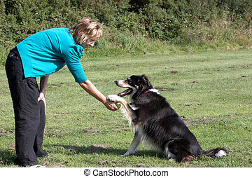 Border Collie with Owner