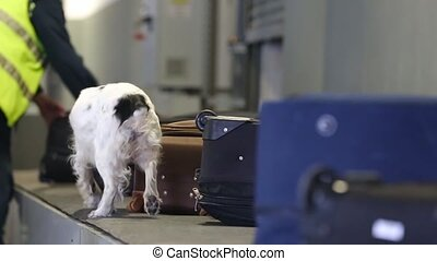 Border dog searches for drugs in baggage