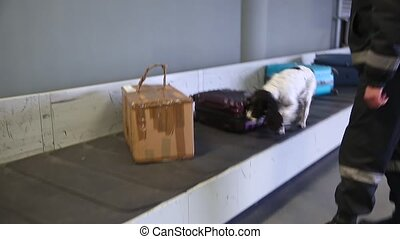 Border dog searches for drugs in baggage. Handheld