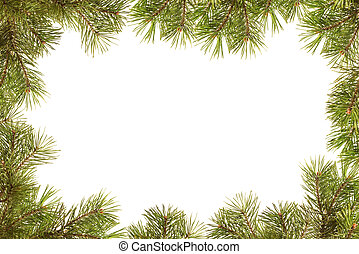 Border, frame from christmas tree branches on a withe background