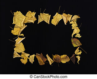 frame of colorful autumn leaves on black background