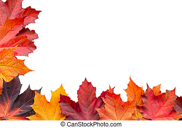 Border of autumn maple leaves isolated on white background