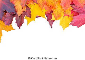 Border of colored maple leaves isolated on white background. Autumn layout for design