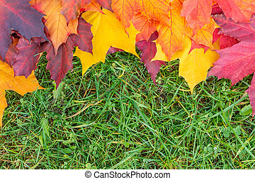 Border of colorful maple leaves on the green grass. Autumn background