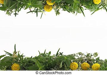 Border of fresh herbs on white background