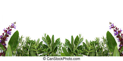 Oregano, sage, and rosemary form this border of fresh herbs, with white background.