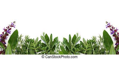 Border of Fresh Herbs - Oregano, sage, and rosemary form...