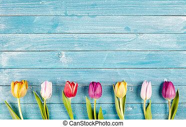 Border of fresh multicolored spring tulips