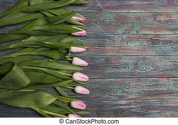 Border of fresh pink spring tulips