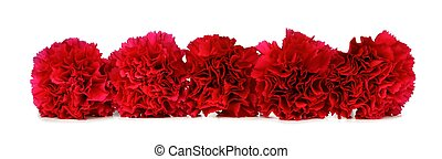 Border of red carnation flowers over white