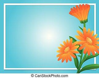 Border template with orange calendula illustration