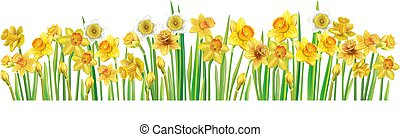 Border with multicolor vector daffodilses over white background