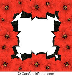 border2, rood, poinsettia