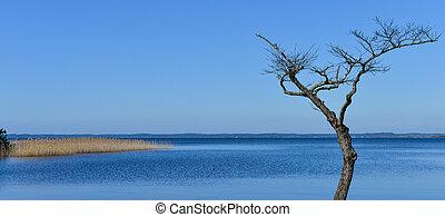 bordo, albero, lago, morto