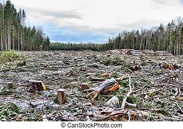 boreal, europeo, bosque, astern
