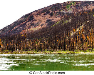 Boreal forest at Yuokon River destroyed by fire