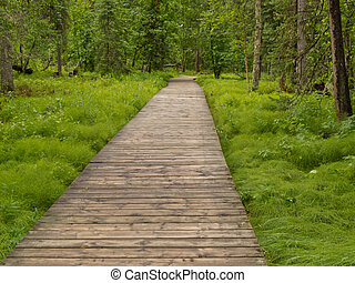Boreal forest taiga boardwalk Northern BC Canada - Forest...
