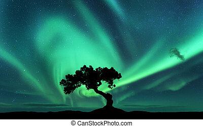 borealis, aurora, silhouette, collina, albero