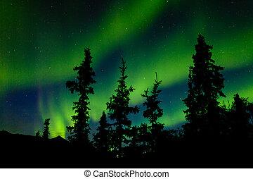 borealis, settentrionale, aurora, luci, taiga, abete rosso,...