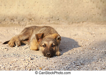 bored puppy dog lying on the ground