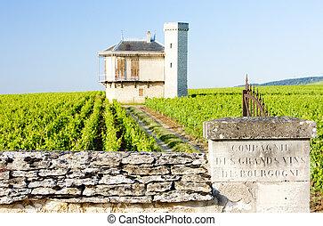 borgoña, de, francia, viñas, vougeot, clos, blanc, castillo