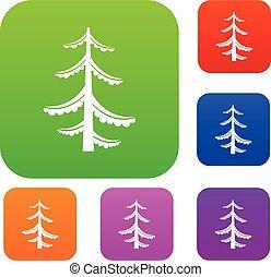 borovice, dát, vybírání