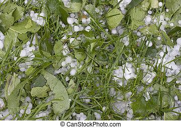 borsó, nagyság, hailstones, képben látható, fű