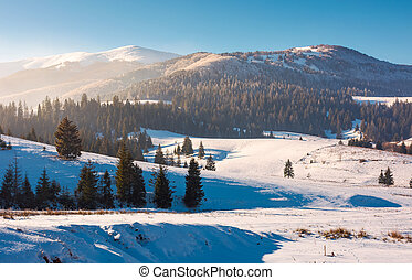 Borzhava mountain ridge in winter. spruce forest on snowy...