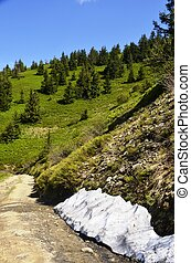 white snow, green slopes of the Carpathian Mountains, Fir trees on background of Blue sky. Ukrainian mountain landscape in May