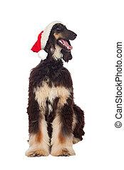 Borzoi breed dog with Santa hat isolated on white background