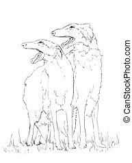 Borzoi dog pencil drawing