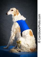 borzoi dog - Russian Wolfhound dog