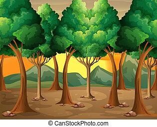 bos, bomen