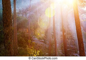 bos, in, ondergaande zon , licht