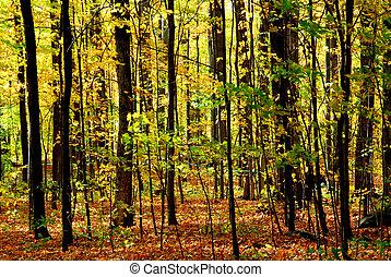 bos, landscape, herfst