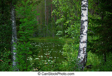 bos, landscape, scandinavische