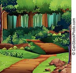 bos, scène, met, vuiligheid spoor
